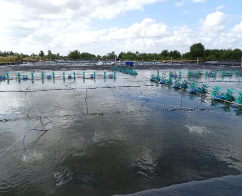 Water-intensive shrimp farming in the southern Mekong Delta (Photo: N. Börsig)